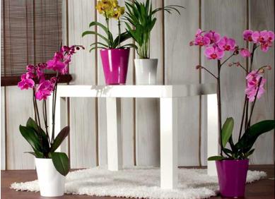 vaza orhideja CALYPSO
